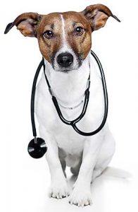 health-conscious_dog